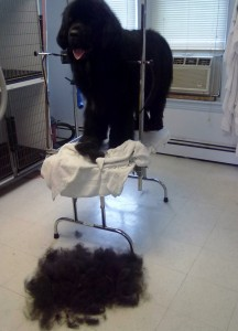 dogdayz dog grooming in worcester ma
